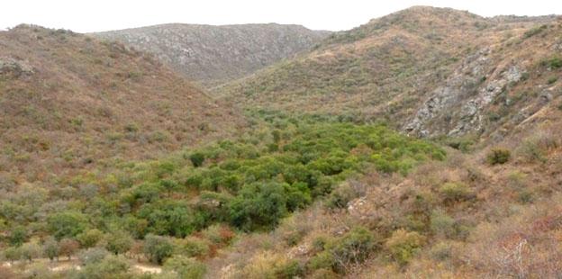 Bosque en Sierras del Norte