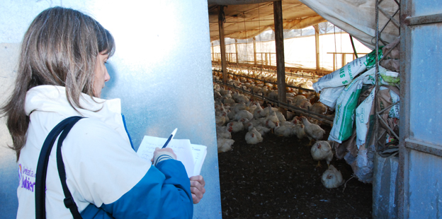 Técnicos de la Provincia inspeccionan avícola en Río Ceballos