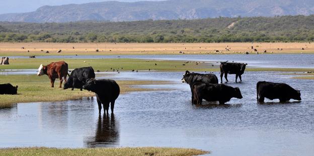 Incautan vacas por contaminación del dique Cruz del Eje