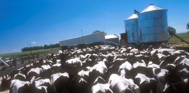 vacas tambo dos