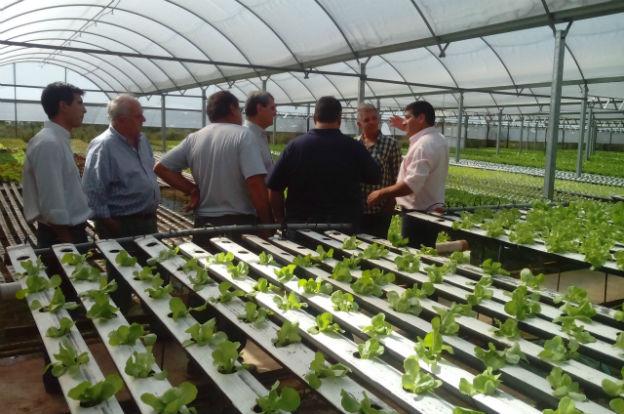 Cultivo Hidroponico Agricultura Participo En Jornada A Campo - Cultivo-hidroponicos