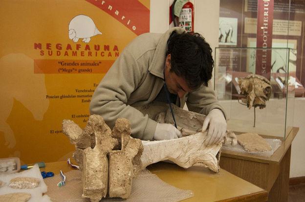 La tarea invisible en el Museo Provincial de Ciencias Naturales