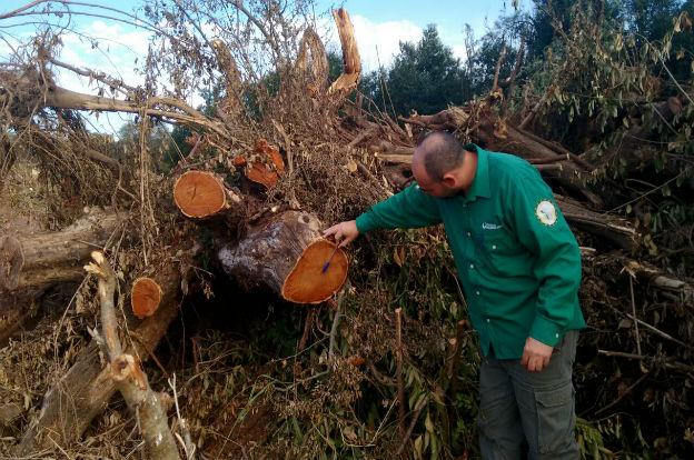 Policía Ambiental frena desmonte y secuestra maquinaria