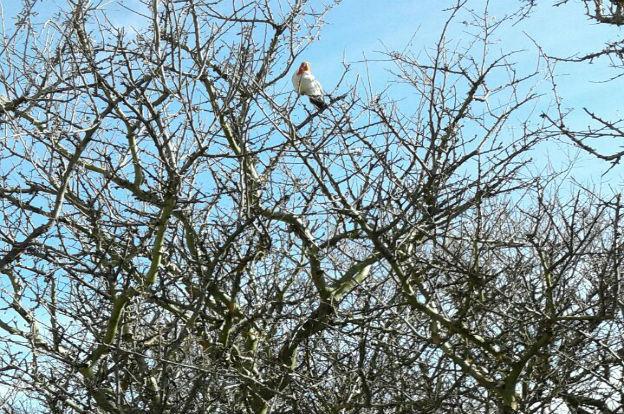 Liberan aves autóctonas en Traslasierra