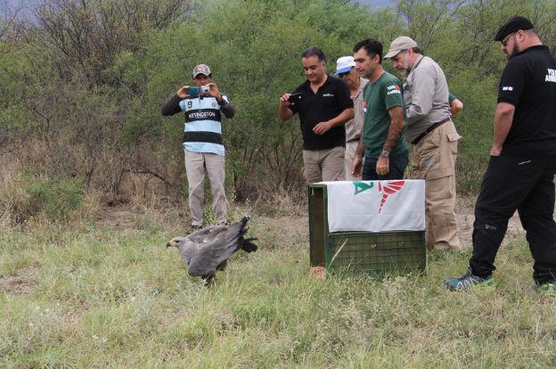 Tras recuperarla, Ambiente liberó un águila
