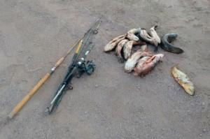En Sebastián Elcano Policía Ambiental  secuestró peces,  cañas y dos cajas de pesca.