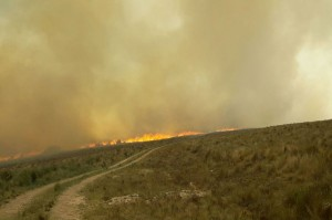 Incendio en La Granja