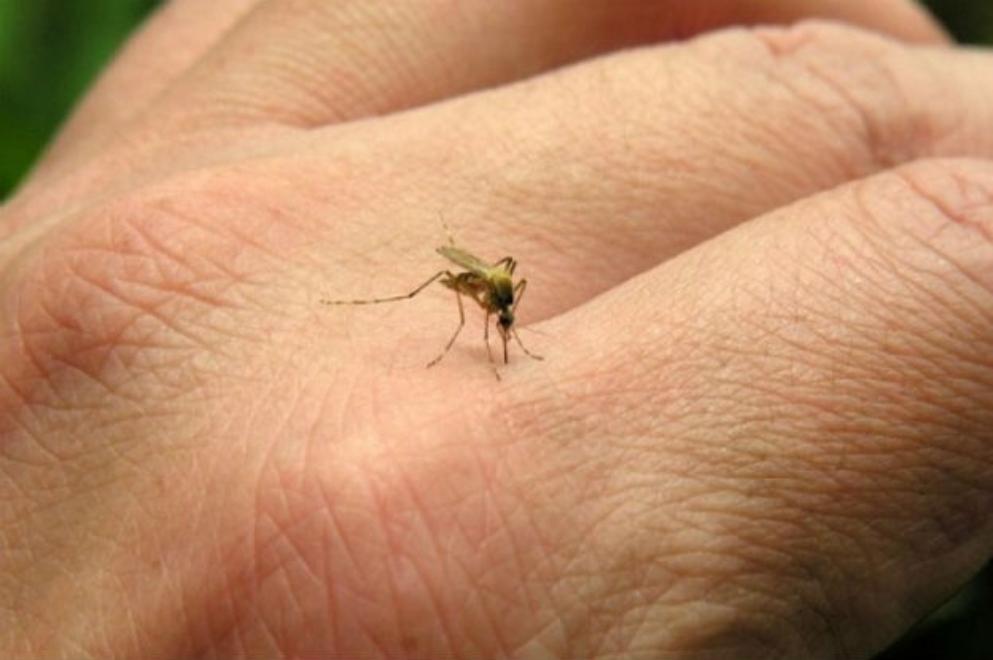 Se detectaron nuevos casos de dengue en la provincia