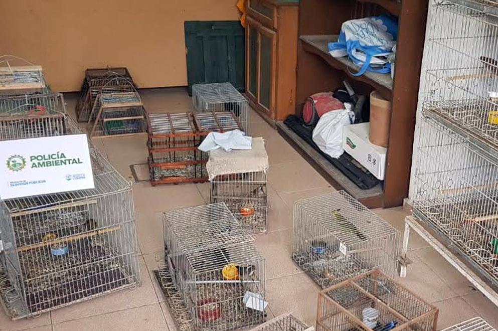 Policía Ambiental rescató 60 aves silvestres en Oliva y Santa Rosa de Calamuchita