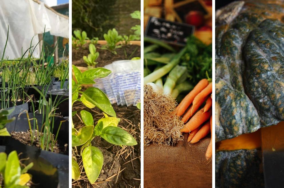 Huerta en tu Hogar: abrió la inscripción para las semillas primavera-verano