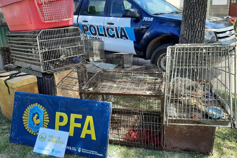 policia ambiental2 - Policía Ambiental rescató 57 animales silvestres en La Carlota